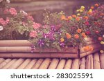 Beautiful Purple Petunia...