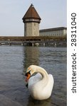 Stock photo lucerne swan in front of kapellbridge with water tower 28311040