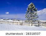 a lone pine tree in the snow... | Shutterstock . vector #28318537