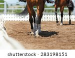 close up of the horse hooves in ... | Shutterstock . vector #283198151