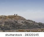 Pair Of Bald Eagles Perching O...