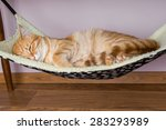 Calm Red Cat Is Sleeping In Th...