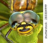 Dragonfly  Latin Odonata . Hea...
