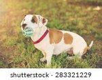 american staffordshire terrier...   Shutterstock . vector #283321229