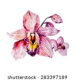 Watercolor Colorful Orchid...