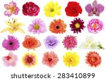 beautiful flowers collage | Shutterstock . vector #283410899