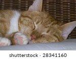 Yellow Tabby Cat Comfortably...