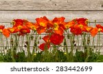 line of red poppies on the... | Shutterstock . vector #283442699