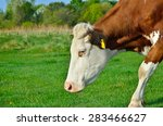 grazing cattle in a pasture... | Shutterstock . vector #283466627