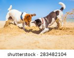 Stock photo jack russell couple of dogs digging a hole in the sand at the beach on summer holiday vacation 283482104