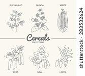 set of six cereals. buckwheat ... | Shutterstock .eps vector #283532624