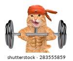 Fitness Cat Lifting A Heavy Bi...