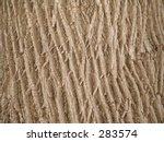 This is a background texture shot of tree bark with a light sepia tone. - stock photo
