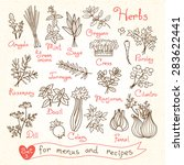 Постер, плакат: Set drawings of herbs