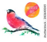 watercolor bird red capped... | Shutterstock .eps vector #283640045