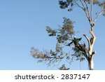 a large tree is being cut down... | Shutterstock . vector #2837147
