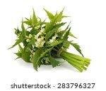 white deadnettle  lamium album... | Shutterstock . vector #283796327