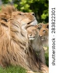 father and daughter  lion and... | Shutterstock . vector #283822301