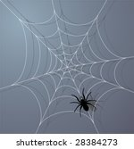 Spider And Web. Vector...