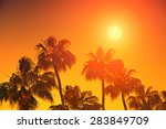 Orange Sunset Over Palm Trees