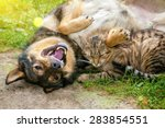 Stock photo dog and cat best friends playing together outdoor lying on the back together 283854551