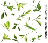 green leaves collage | Shutterstock . vector #283891811