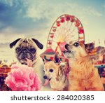 three dogs at a carnival of... | Shutterstock . vector #284020385