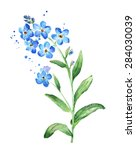 Forget Me Not Flower  Watercolor
