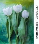 white tulips | Shutterstock . vector #28407637