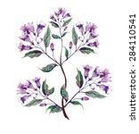 weigelas flower | Shutterstock . vector #284110541