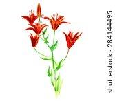 vector watercolor orange lilies ...