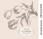 vintage tulips  hand drawn... | Shutterstock .eps vector #284161949
