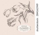 vintage tulips  hand drawn... | Shutterstock .eps vector #284161949
