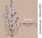 chicory plant. hand drawn... | Shutterstock .eps vector #284161994