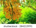 palm fruit yellow. | Shutterstock . vector #284215991