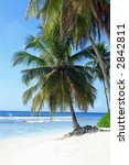palm trees on tropical island... | Shutterstock . vector #2842811