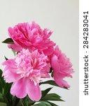 pink peony flowers | Shutterstock . vector #284283041