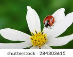 Ladybug And Flower On A Green...