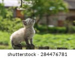 Stock photo kitten on wooden fence close up 284476781