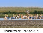 a group of pelicans in the... | Shutterstock . vector #284523719