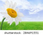 Daisy  Single Flower  Flower.