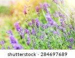 lavander flowers in my garden ... | Shutterstock . vector #284697689