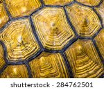 Stock photo texture of turtle carapace 284762501