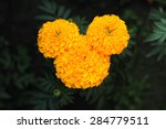 Yellow Flower Which Isolated...