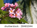 Beautiful Tropical Flower Wit...