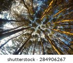 view up at the crowns of trees... | Shutterstock . vector #284906267