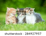 Stock photo three little kittens sitting on the lawn in summer 284927957