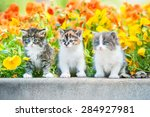 Stock photo three little kitten sitting near a flowerbed 284927981