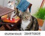 Cats On The Balcony