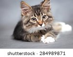 Stock photo portrait of lying cat 284989871